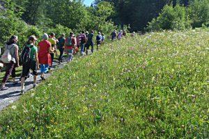 Literarische Wanderung durch Blumenwiesen