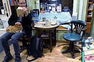 Lesen und den Kater kraulen - die beste Entspannung
